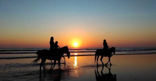 Terapie koněm